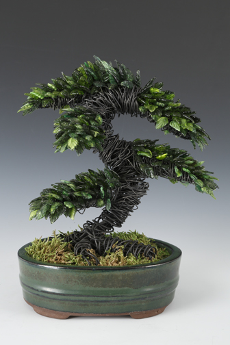 Evergreen Bonsai ... more